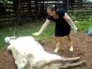 ТП vs Корова (корова легнула зоофилку)